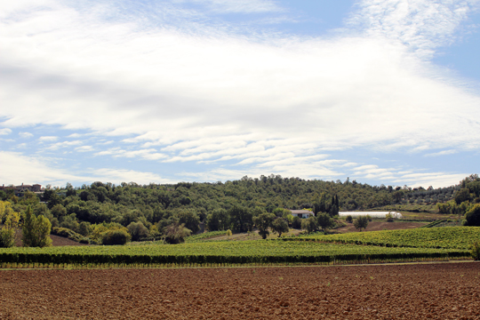 Preparare Zile de toamna frumoasa. In Toscana 6