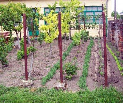 Preparare Đurđevdan, 6 mai 2009 10