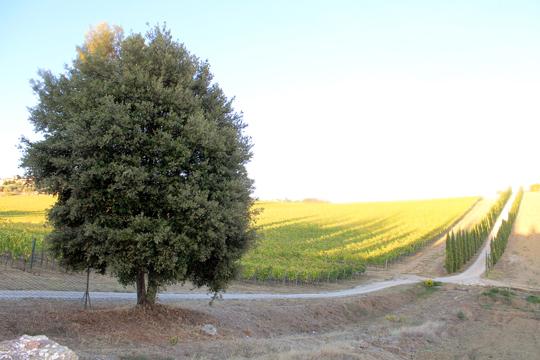 Preparare Zile de toamna frumoasa. In Toscana 1