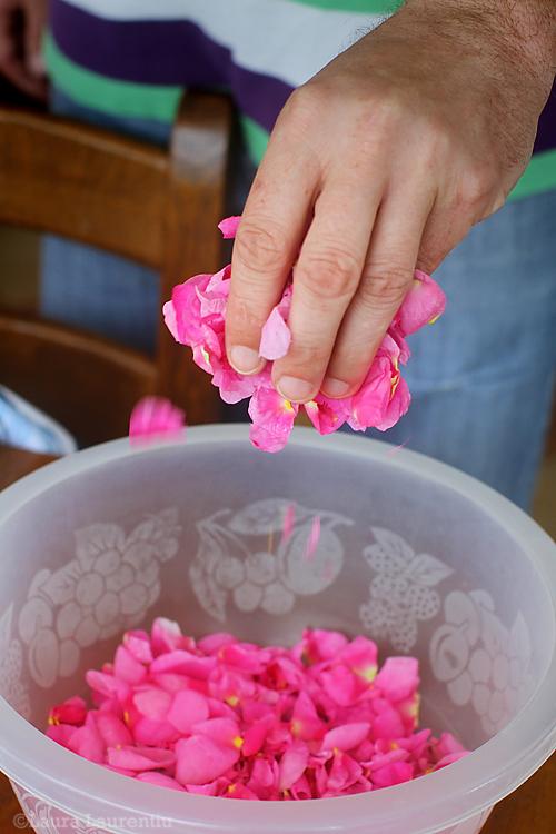 petale de trandafiri-1