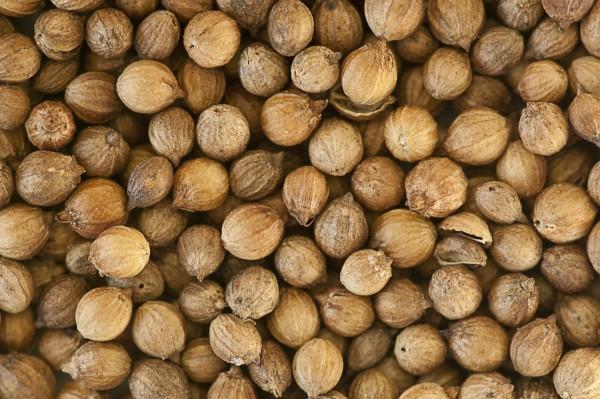 seminte de coriandru uscate