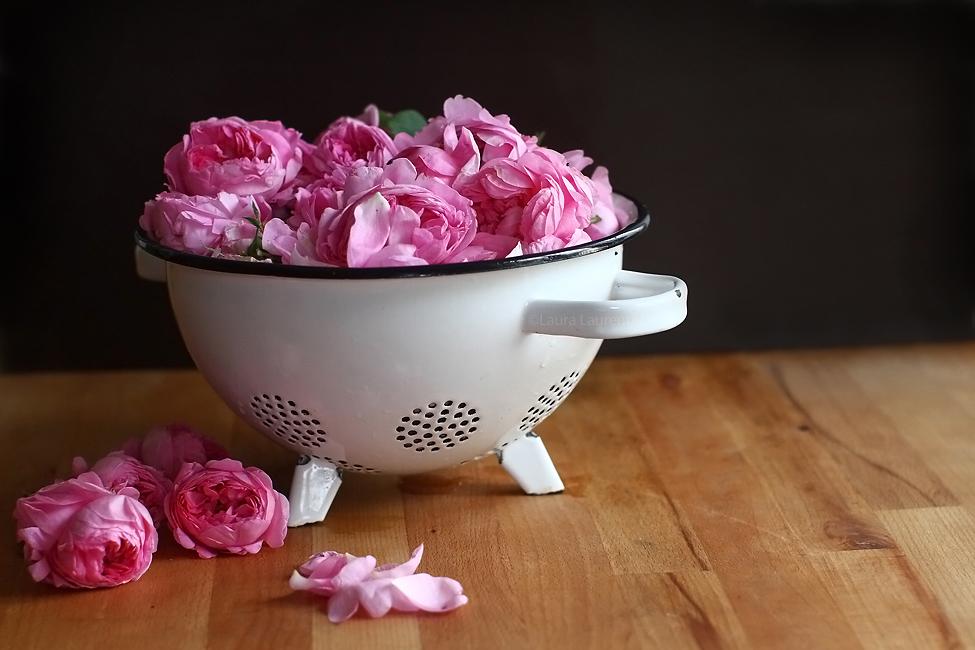 trandafiri rosa damascena 1