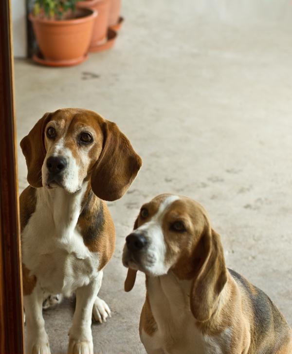 Maya și Lulu așteptând oase