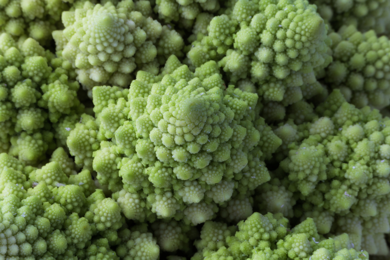 broccolo romanesco, conopida romanesco, brocoli romanesco