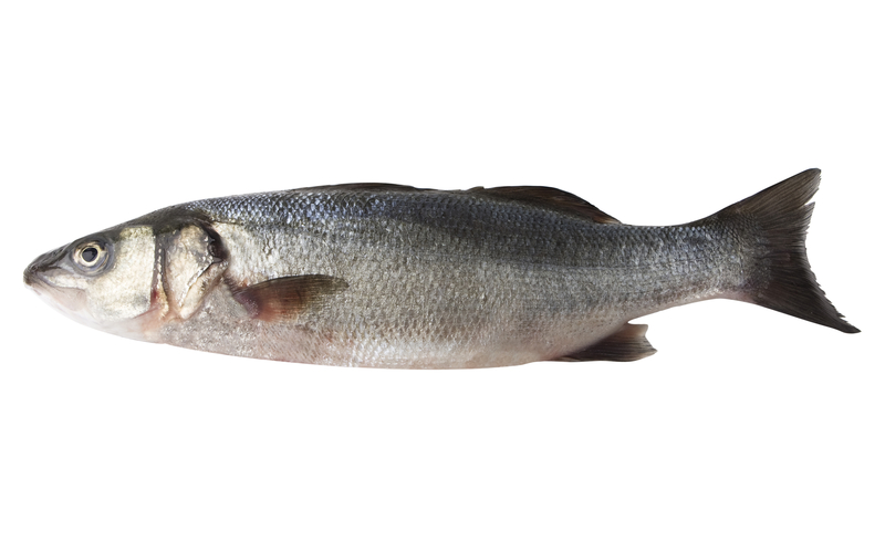 sea bass, levrek, loup de mer, biban, lup de mare