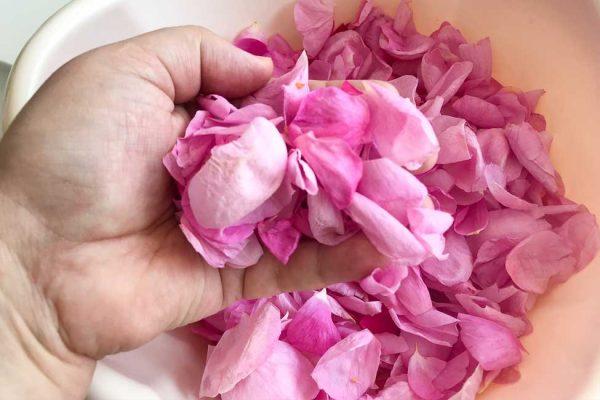 petale de trandafir rosa damascena